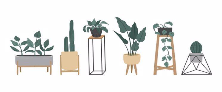 استفاده از گیاهان در فنگ شویی